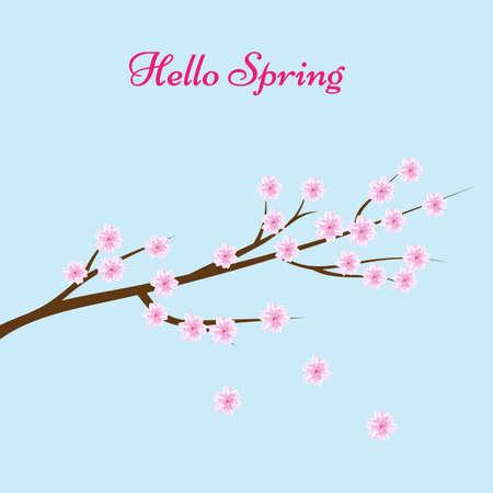 Sakura blossom flowers background