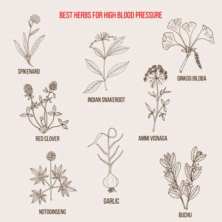Best herbs to control high blood pressure Ilustração