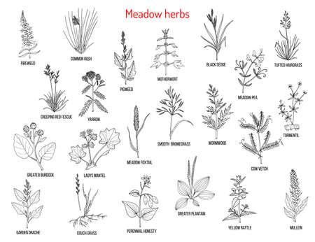 Erbe ed erbe di prato selvatico