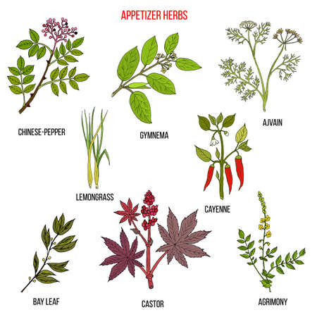 Meilleure collection d'herbes apéritives