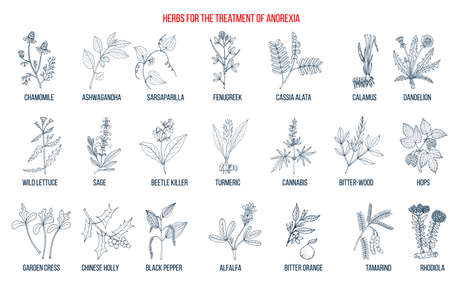 Best herbs for the treatment of anorexia Ilustração