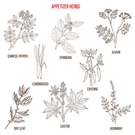 La migliore collezione di erbe da antipasto Vettoriali