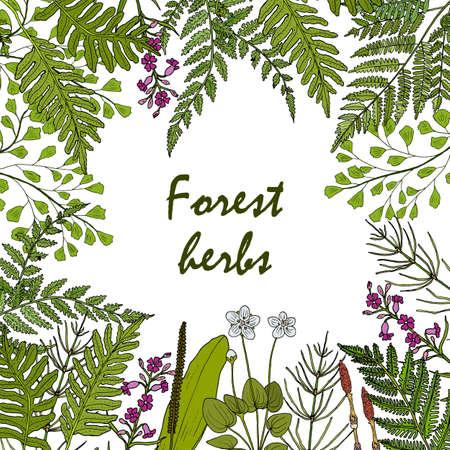 Forest ferns and herbs set. Hand drawn vector botanical illustration Ilustração
