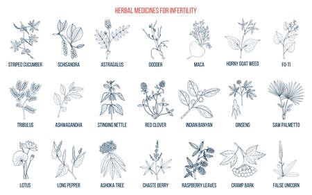 Best herbs for infertility