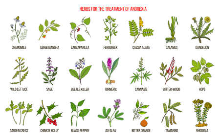 Best herbs for the treatment of anorexia Ilustracja