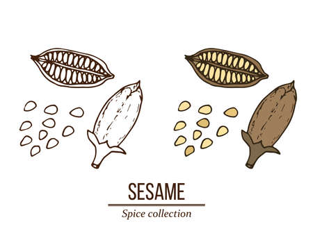 Spice collection, sesame seed hand drawn