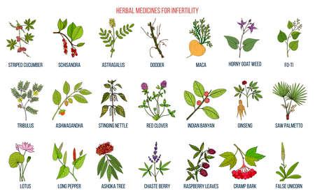 Las mejores hierbas para la infertilidad Ilustración de vector