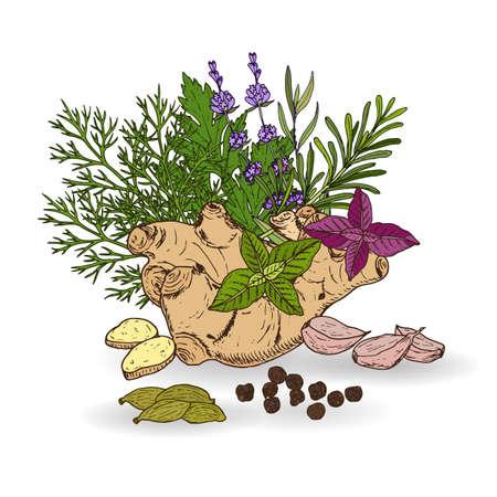 Ensemble dessiné à la main d'herbes et d'épices culinaires. Illustration vectorielle