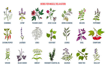 Best herbs for muscle relaxation Zdjęcie Seryjne - 133566204
