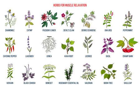 Le migliori erbe per il rilassamento muscolare Vettoriali