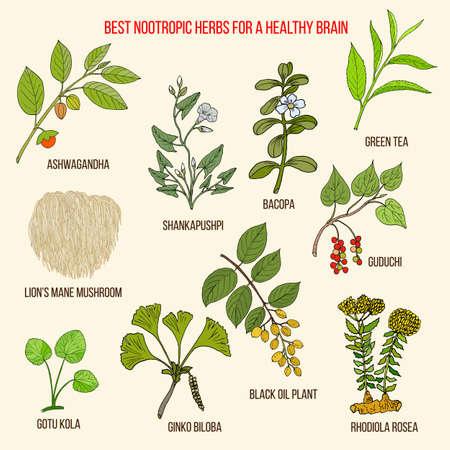Las mejores hierbas medicinales nootrópicas para un cerebro sano