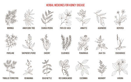 Best herbs for kidney disease
