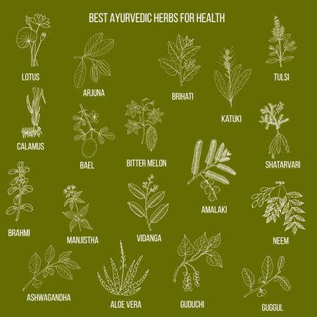 Ayurvedische Kräuter, natürliches botanisches Set Vektorgrafik