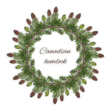 Canadian hemlock wreath. Hand drawn botanical vector illustration