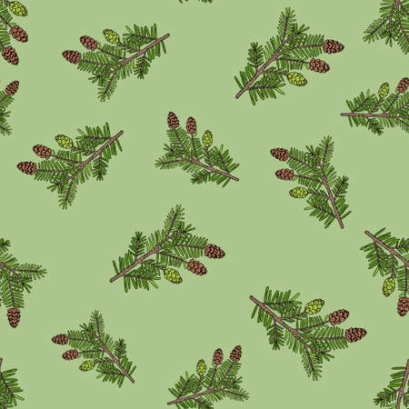 Seamless pattern with hand drawn canadian hemlock. Vector herbal background