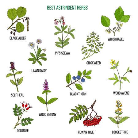 Best astridgent herbs