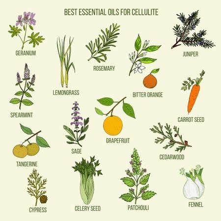 Best essential oils for cellulite
