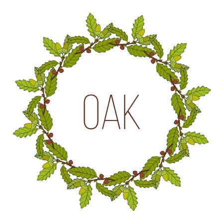 Wreath with aleppo oak branch. Hand drawn botanical vector illustration Ilustración de vector