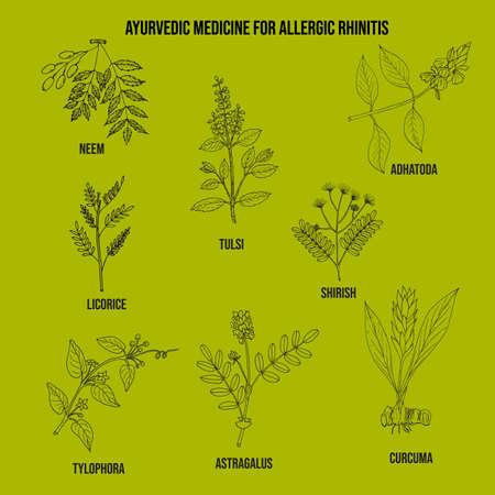 Best ayurvedic herbs for allergic rhinitis. Hand drawn vector set of medicinal plants Ilustracja