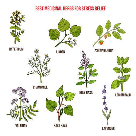 Le migliori erbe medicinali per alleviare lo stress