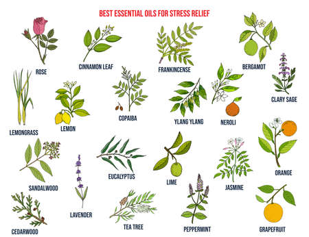 Best essential oils for stress relief 向量圖像