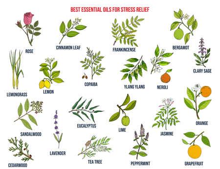 Les meilleures huiles essentielles pour soulager le stress