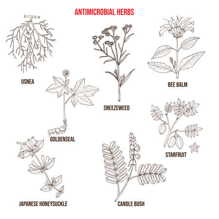Set of antimicrobial herbs Vector Illustration