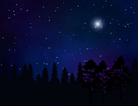 Forest landscape and starry night sky