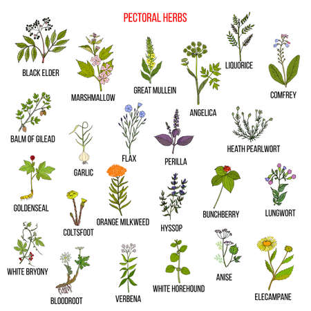 Set of pectoral herbs