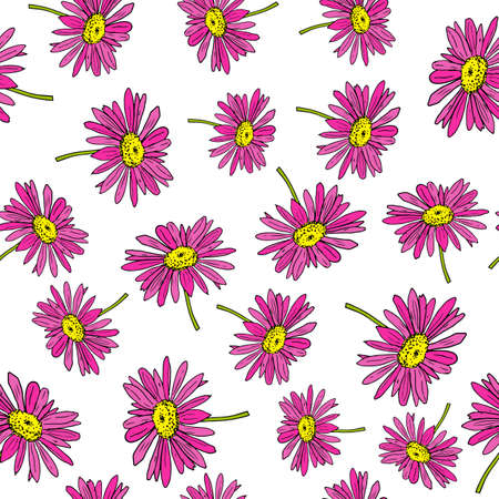 Pyrethrum daisy seamless pattern on white background