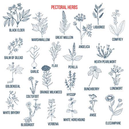 Set of pectoral herbs Vektorové ilustrace