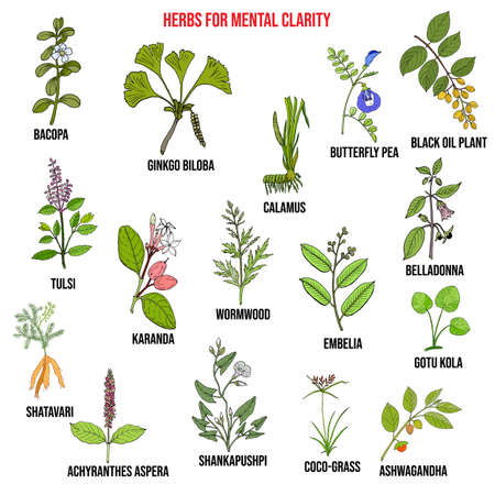 Best herbs for mental clarity 向量圖像