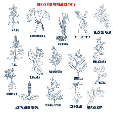 Best herbs for mental clarity Иллюстрация