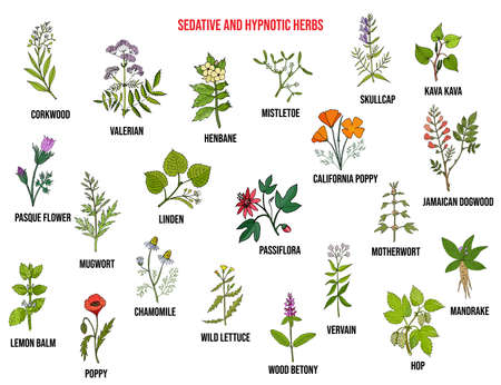 Best sedative and hypnotic herbs. Hand drawn vector set of medicinal plants