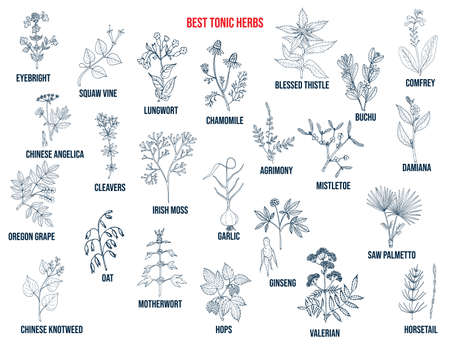 Best tonic herbs collection. Hand drawn vector set Vettoriali