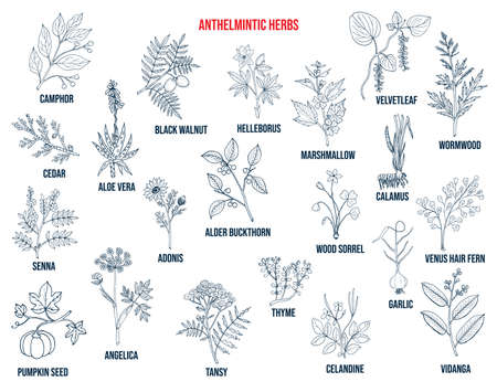Anthelmintic or antihelminthic herbs collection. Hand drawn set of medicinal herbs