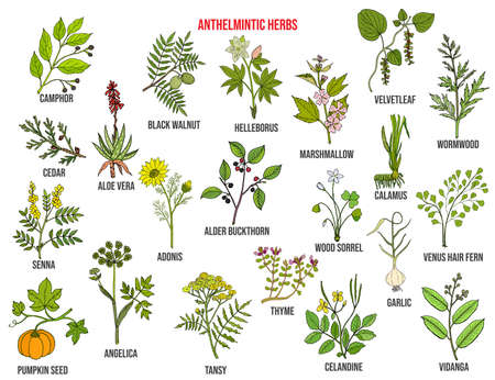 Anthelmintic or antihelminthic herbs collection