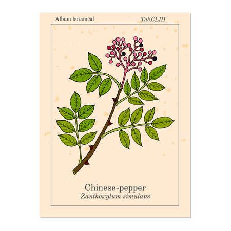 Chinese-pepper, flatspine prickly-ash zanthoxylum simulans , medicinal plant
