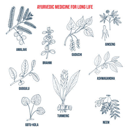 Ayurvedic herbs for long life, natural botanical set Vetores