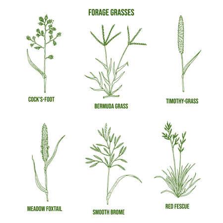 Forage grasses set. Hand drawn vector illustration
