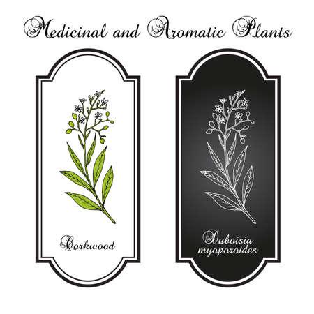 Corkwood Duboisia myoporoides , medicinal plant