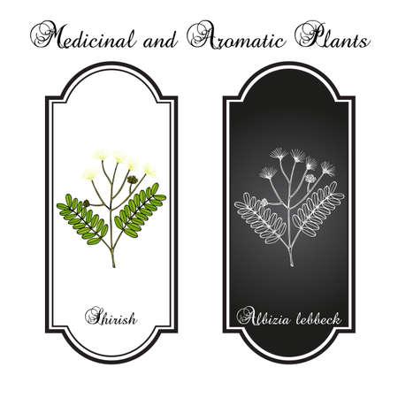 Shirish albizia lebbeck , or lebbek tree, medicinal plant