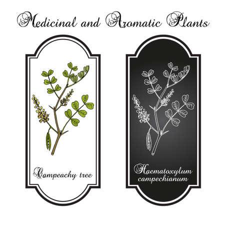 Campeachy tree Haematoxylum campechianum , medicinal plant 矢量图像