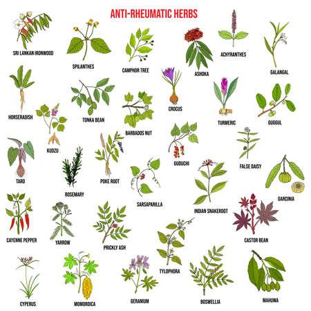 Best anti-rheumatic herbs, natural botanical set