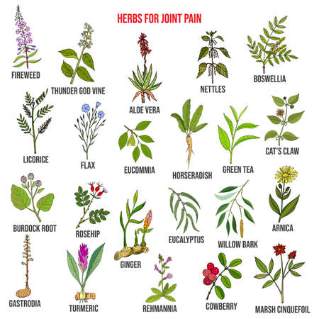 Best herbs for joint pain, natural botanical set Vetores
