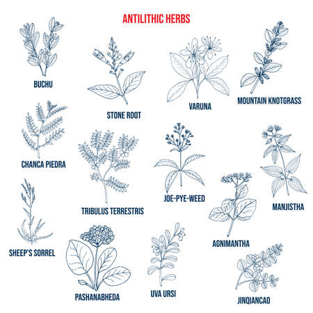 Antilithic herbs, natural botanical set