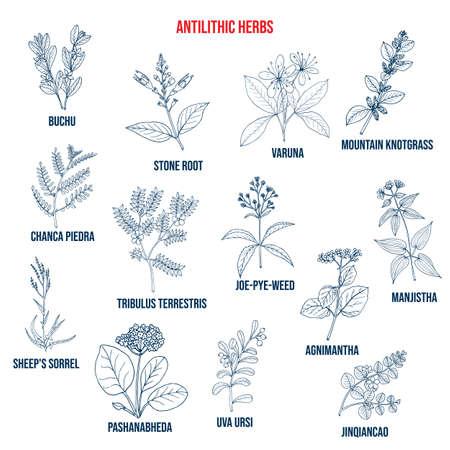 Antilithic herbs, natural botanical set
