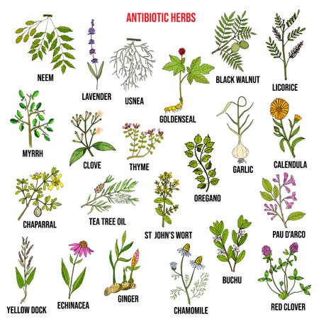 Antibiotic herbs collection. Hand drawn vector set Ilustracja
