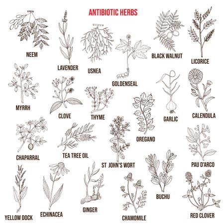 Antibiotic herbs collection. Hand drawn vector set Vectores