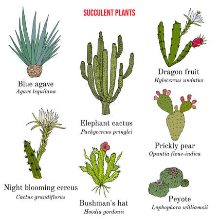 Medicinal and edible succulent plants collection